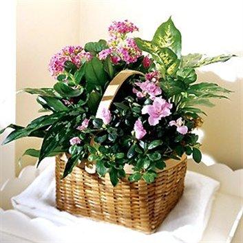 Beneficios de las plantas ornamentales webscolar for Algunas plantas ornamentales