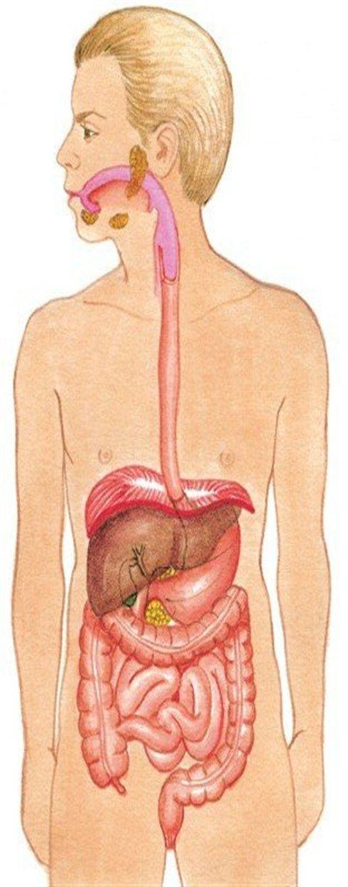 Los 9 sistemas del cuerpo humano y sus generalidades | Webscolar