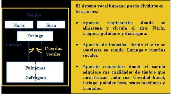 Mecanismo de Producción de la Voz y el Habla | Webscolar